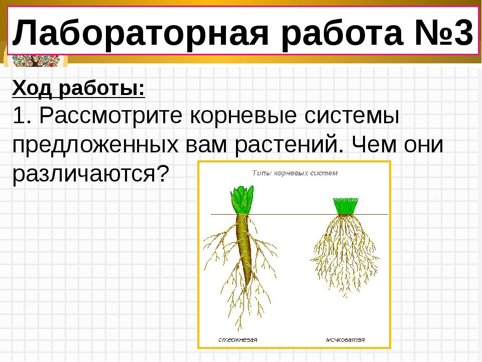Лабораторная работа №3 Ход работы: 1. Рассмотрите корневые системы предложенн...