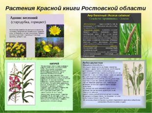 Растения Красной книги Ростовской области