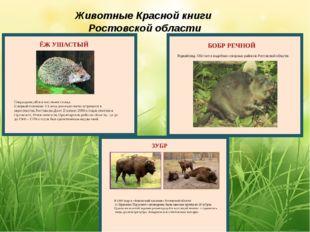 Животные Красной книги Ростовской области