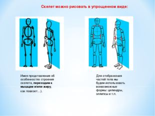 Скелет можно рисовать в упрощенном виде: Имея представления об особенностях с