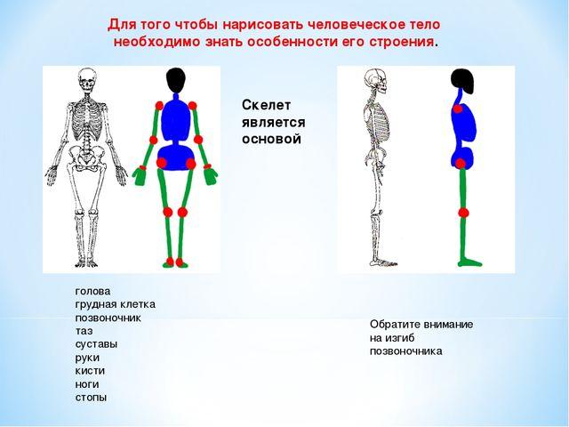 Для того чтобы нарисовать человеческое тело необходимо знать особенности его...
