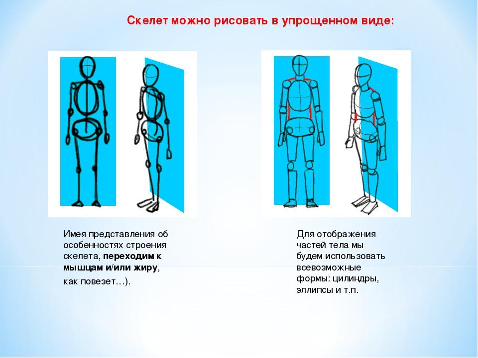 Скелет можно рисовать в упрощенном виде: Имея представления об особенностях с...