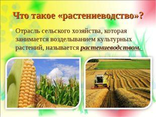Что такое «растениеводство»? Отрасль сельского хозяйства, которая занимается