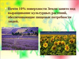 Почти 10% поверхности Земли занято под выращивание культурных растений, обесп