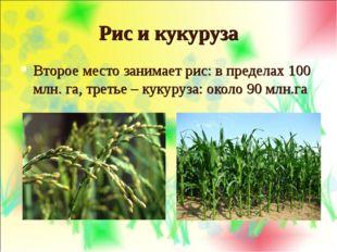 Рис и кукуруза Второе место занимает рис: в пределах 100 млн. га, третье – ку
