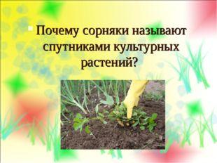 Почему сорняки называют спутниками культурных растений?