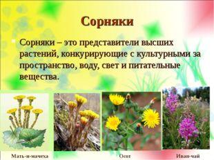 Сорняки Сорняки – это представители высших растений, конкурирующие с культурн
