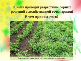 К чему приводит разрастание сорных растений с хозяйственной точки зрения? В ч