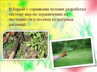 В борьбе с сорняками человек разработал систему мер по ограничению их численн