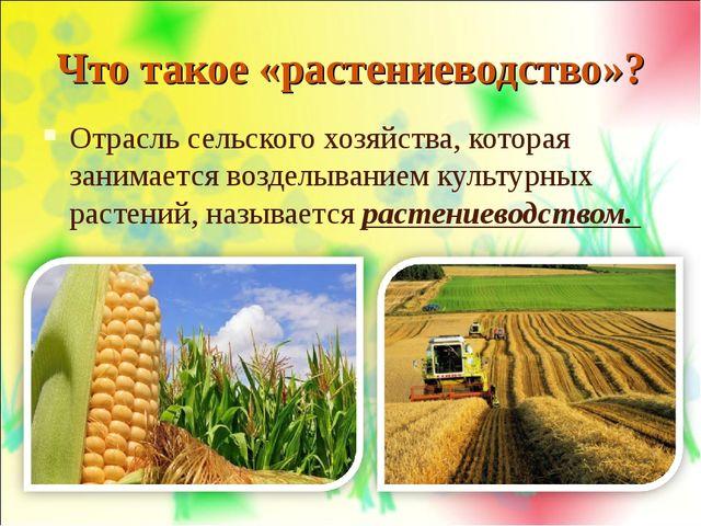 Что такое «растениеводство»? Отрасль сельского хозяйства, которая занимается...