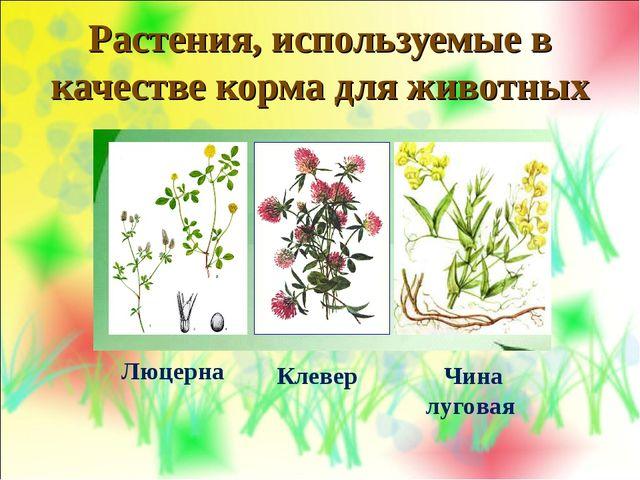 Растения, используемые в качестве корма для животных Люцерна Клевер Чина луго...