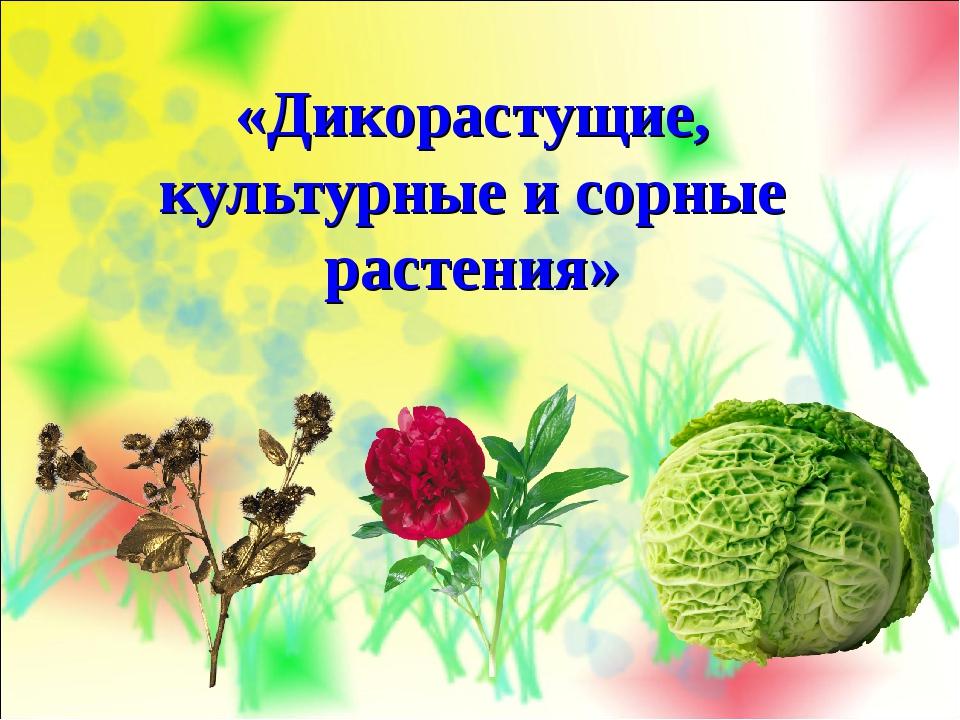 «Дикорастущие, культурные и сорные растения»
