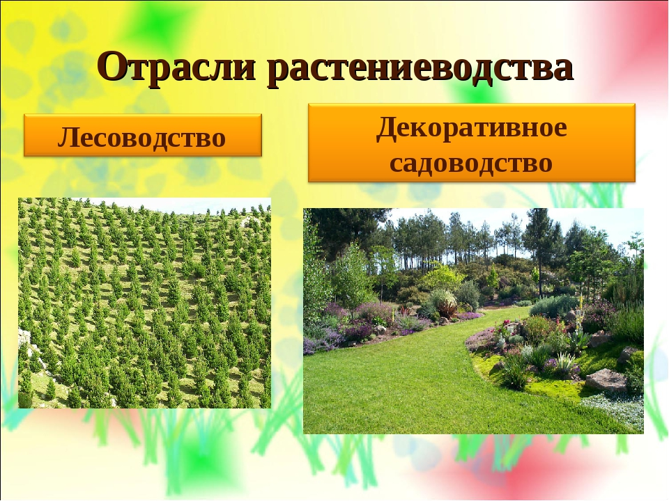 Отрасли растениеводства