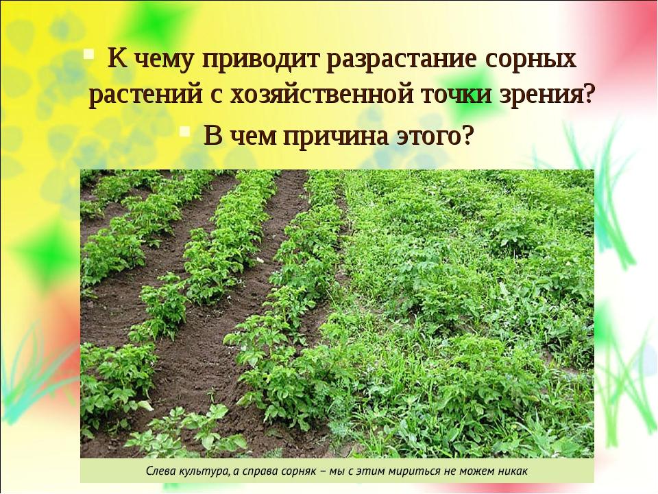 К чему приводит разрастание сорных растений с хозяйственной точки зрения? В ч...