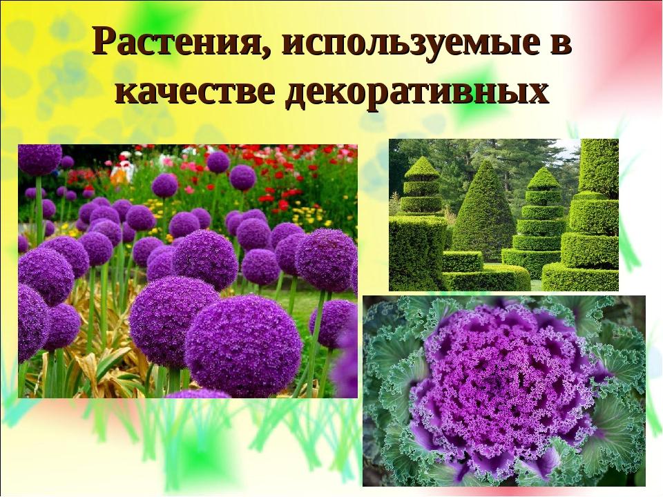 Растения, используемые в качестве декоративных