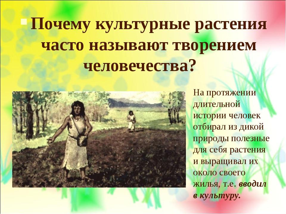 Почему культурные растения часто называют творением человечества? На протяжен...