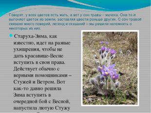 Говорят, у всех цветов есть мать, а вот у сон-травы – мачеха. Она-то и выгоня