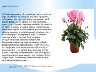 Ц И К Л А М Е Н Любопытная легенда об этом цветке гласит, что когда царь Сол