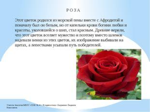 Р О З А Этот цветок родился из морской пены вместе с Афродитой и поначалу был