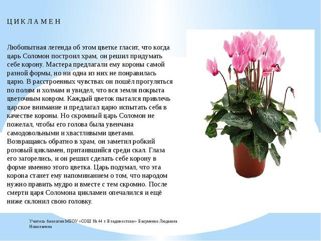 Ц И К Л А М Е Н Любопытная легенда об этом цветке гласит, что когда царь Сол...