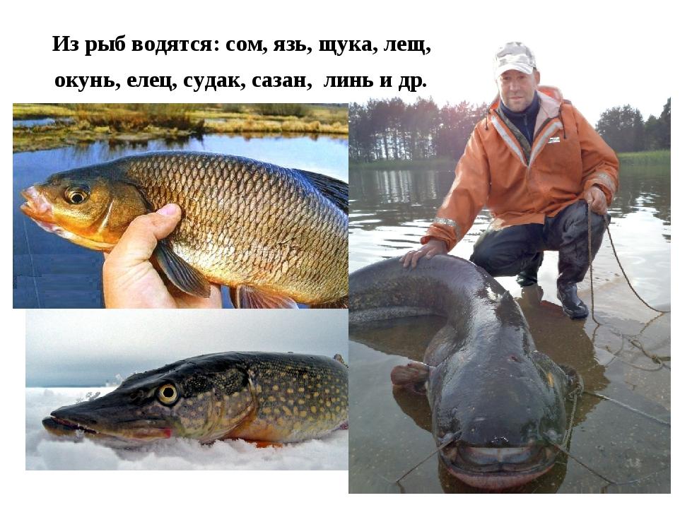 Из рыб водятся: сом, язь, щука, лещ, окунь, елец, судак, сазан, линь и др.