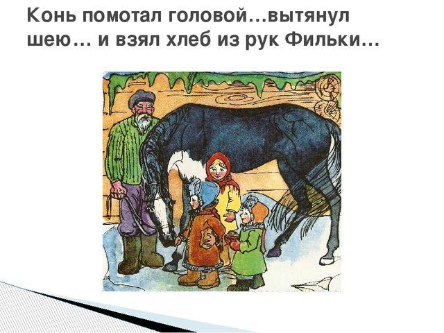 Конь помотал головой…вытянул шею… и взял хлеб из рук Фильки…