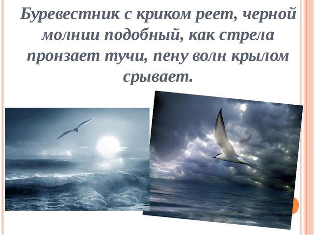 Буревестник с криком реет, черной молнии подобный, как стрела пронзает тучи,...