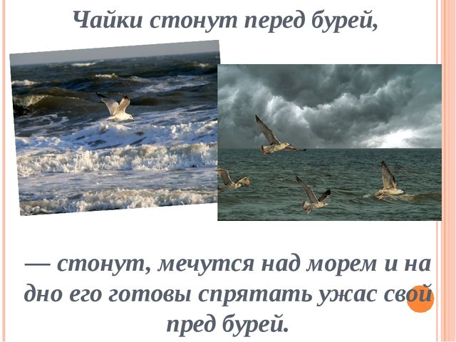 Чайки стонут перед бурей, — стонут, мечутся над морем и на дно его готовы спр...