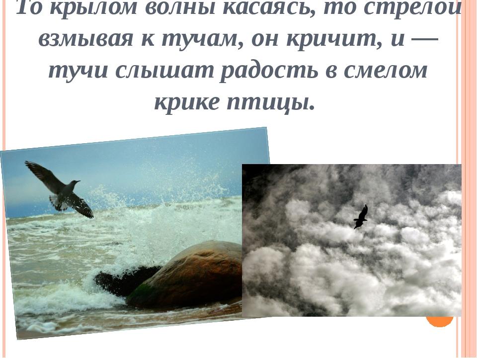 То крылом волны касаясь, то стрелой взмывая к тучам, он кричит, и — тучи слыш...