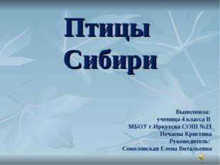 Птицы Сибири Выполнила: ученица 4 класса В МБОУ г.Иркутска СОШ №21 Нечаева Кр