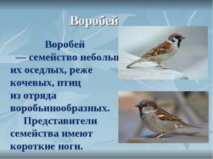 Воробей Воробей —семействонебольших оседлых, реже кочевых,птиц изотр