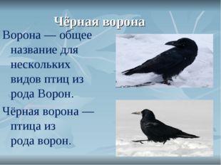 Чёрная ворона Ворона— общее название для нескольких видовптициз родаВорон