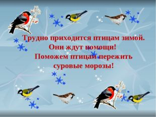Трудно приходится птицам зимой. Они ждут помощи! Поможем птицам пережить суро