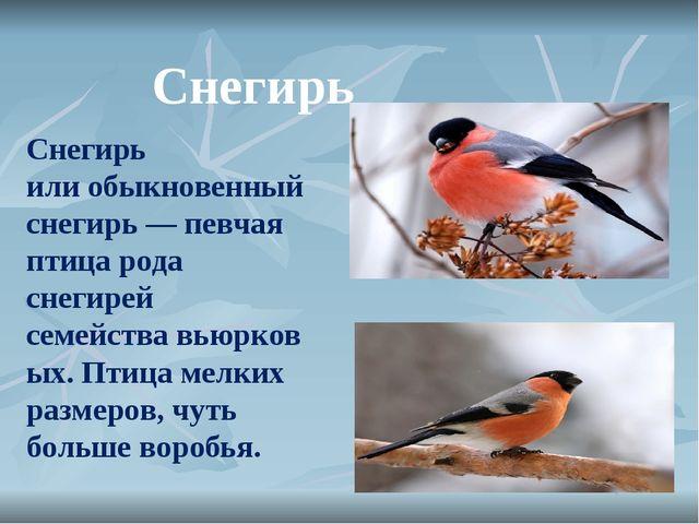 Снегирь илиобыкновенный снегирь— певчая птица рода снегирей семействавьюрк...