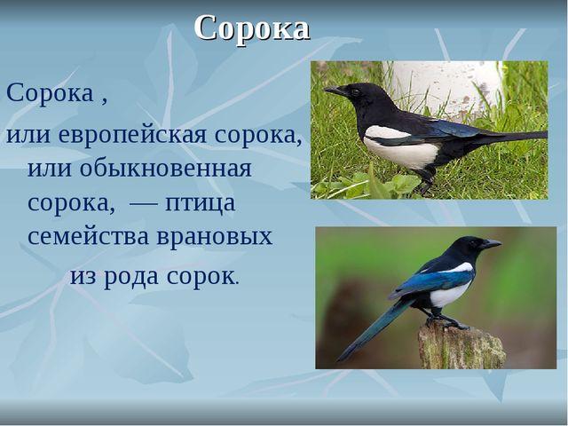 Сорока Сорока, илиевропейская сорока, илиобыкновенная сорока, —птица сем...