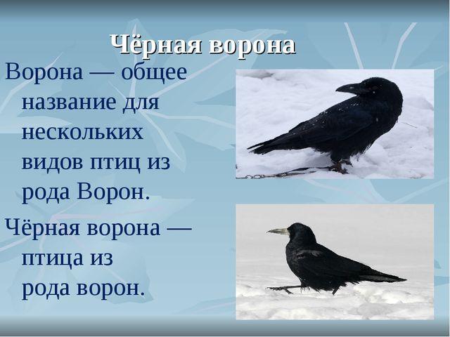 Чёрная ворона Ворона— общее название для нескольких видовптициз родаВорон...