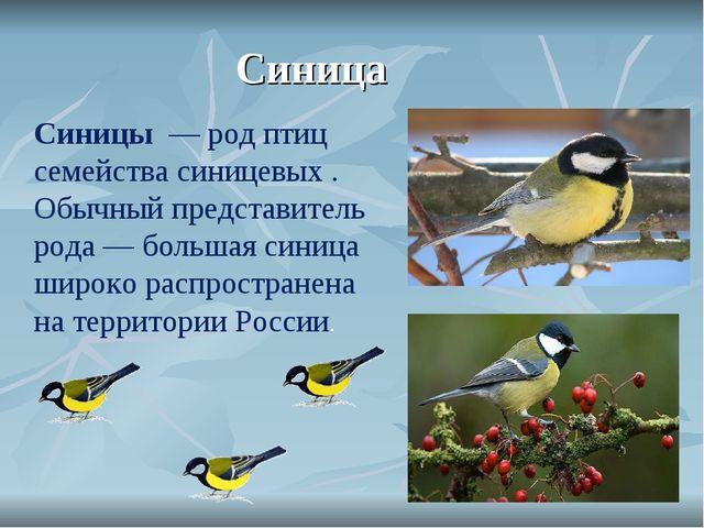 Синица Синицы — род птиц семействасиницевых . Обычный представитель рода —...