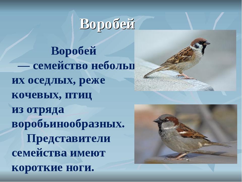 Воробей Воробей —семействонебольших оседлых, реже кочевых,птиц изотр...