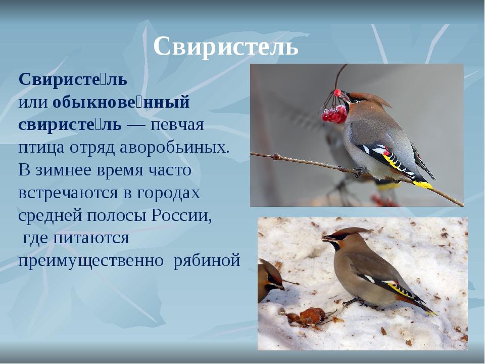 Свиристель Свиристе́ль илиобыкнове́нный свиристе́ль— певчая птица отряд аво...
