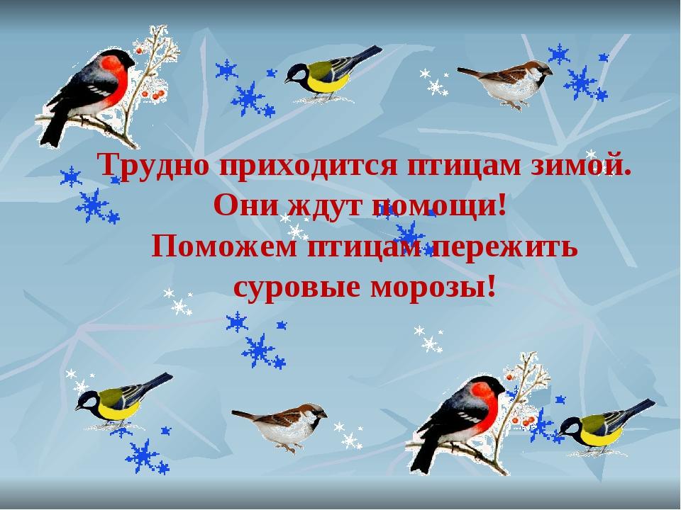 Трудно приходится птицам зимой. Они ждут помощи! Поможем птицам пережить суро...