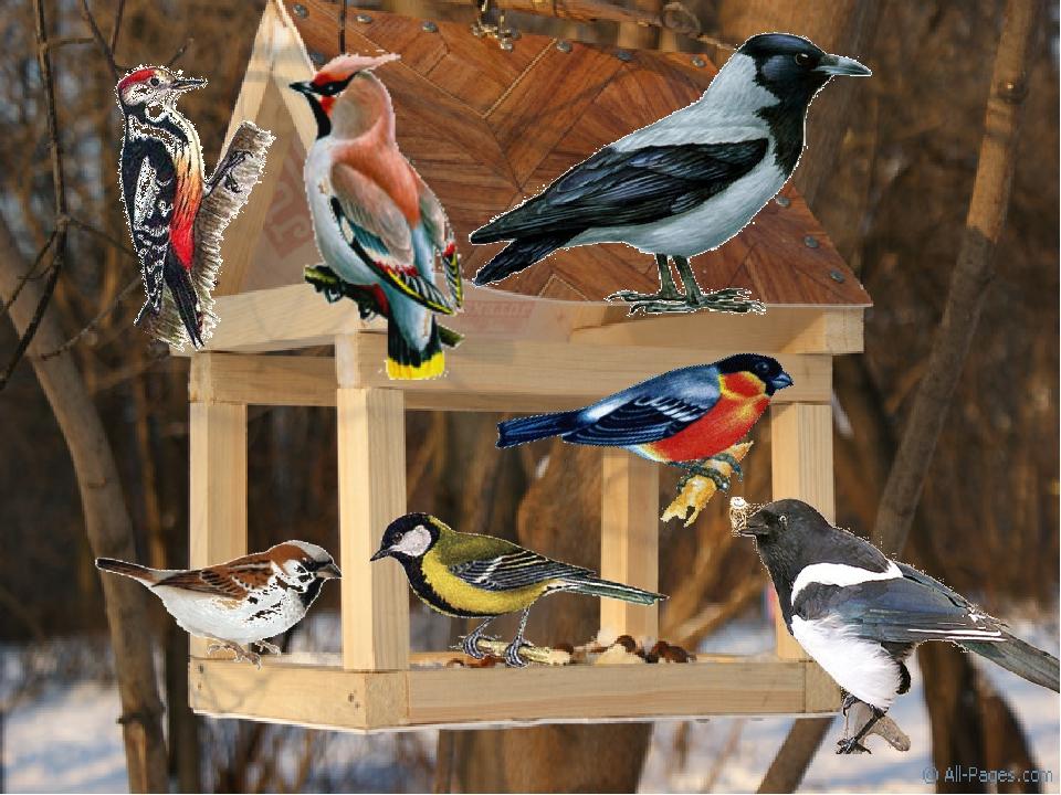 Заполнять свадебные, картинки городские птицы для детей