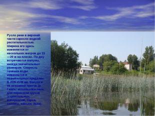 Русло реки в верхней части заросло водной растительностью. Ширина его здесь и