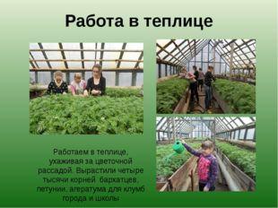 Работа в теплице Работаем в теплице, ухаживая за цветочной рассадой. Вырастил