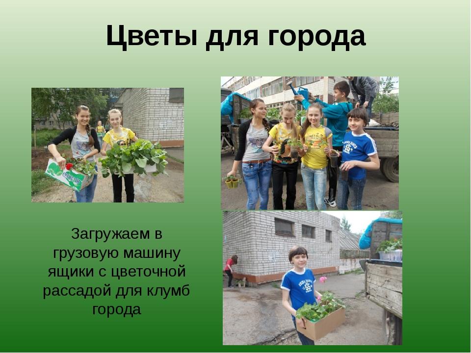 Цветы для города Загружаем в грузовую машину ящики с цветочной рассадой для к...