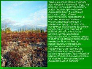 Заказник находится в подзонах арктической и типичной тундр. На острове Белый