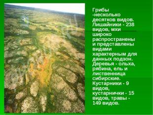 Грибы -несколько десятков видов. Лишайники - 238 видов, мхи широко распростра