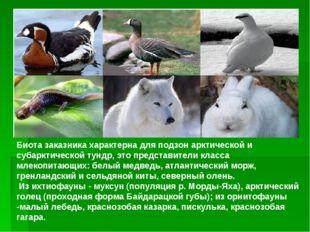 Биота заказника характерна для подзон арктической и субарктической тундр, это