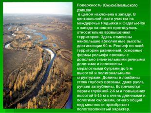 ПоверхностьЮжно-Ямальского участка в целом наклонена к западу. В центрально
