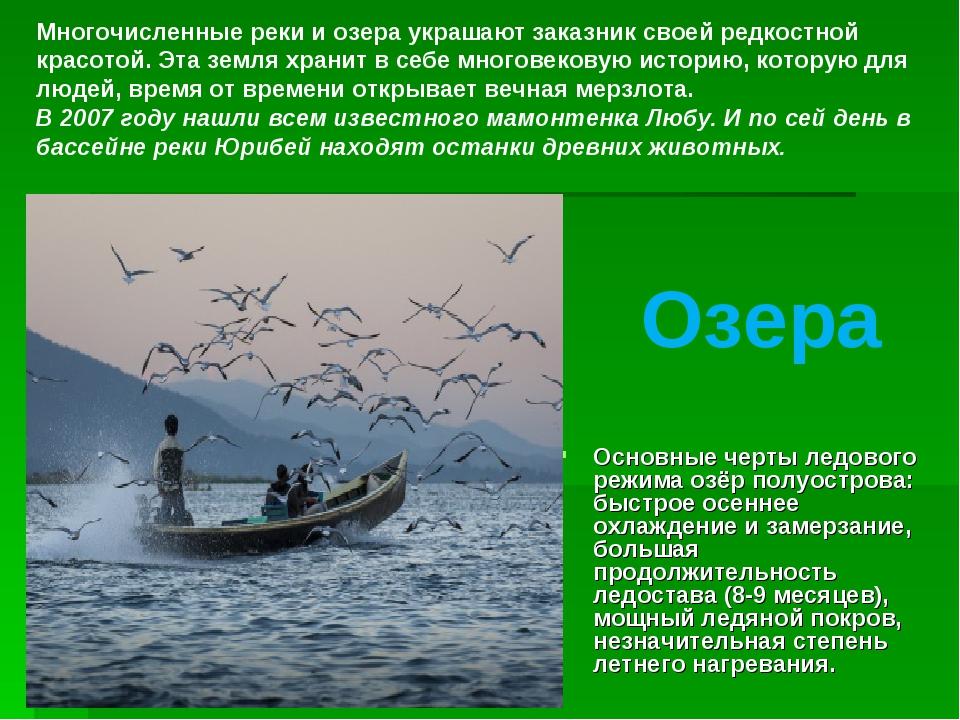 Основные черты ледового режима озёр полуострова: быстрое осеннее охлаждение...