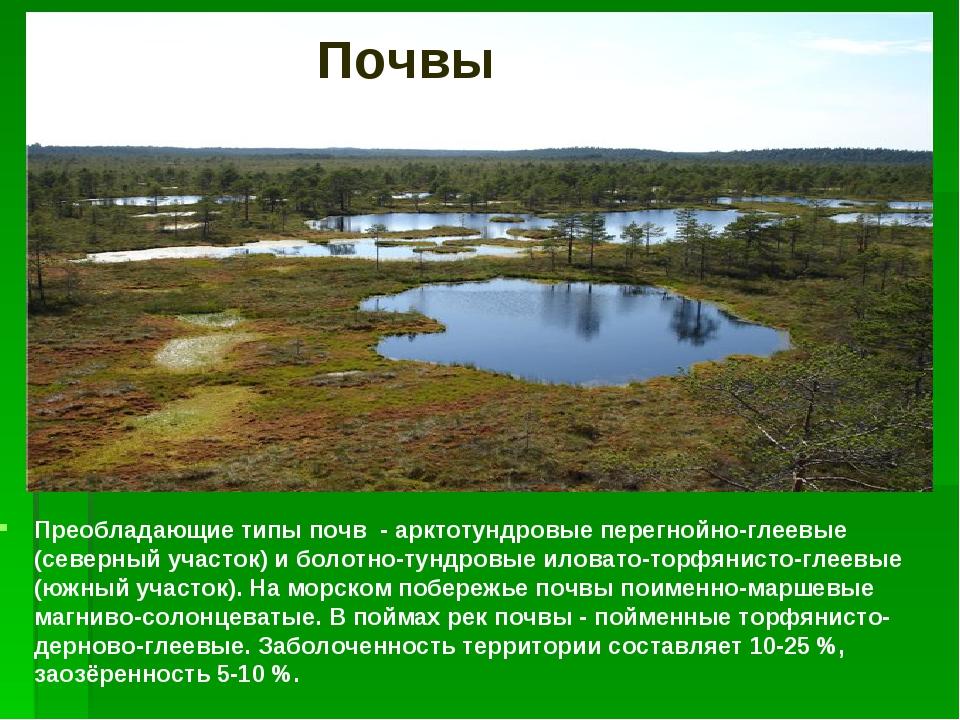 Преобладающие типы почв - арктотундровые перегнойно-глеевые (северный участок...